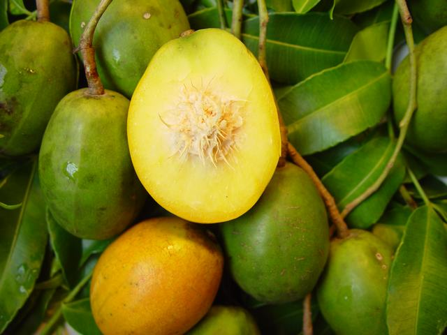 10 Popular Dishes From Across Africa additionally 5562062626 also Beautiful Food Photos likewise Ackee Fruit Deadly And Delicious besides Pakistan New Vistas In Agriculture. on trinidad and tobago fruits