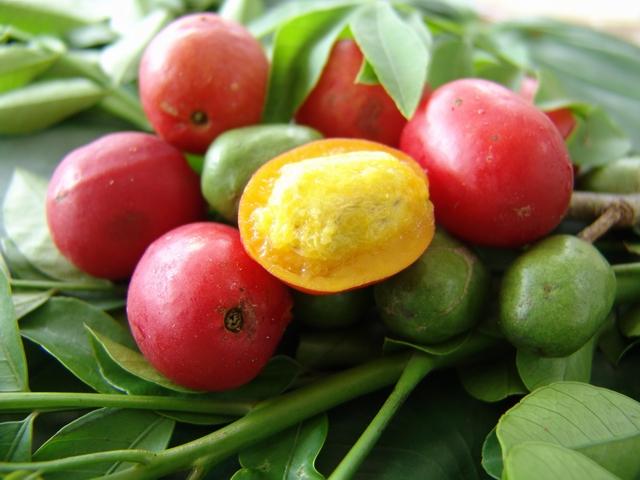 http://caribfruits.cirad.fr/var/caribfruits/storage/images/fruits_des_antilles/prune_mombin/3782-2-fre-FR/prune_mombin.jpg