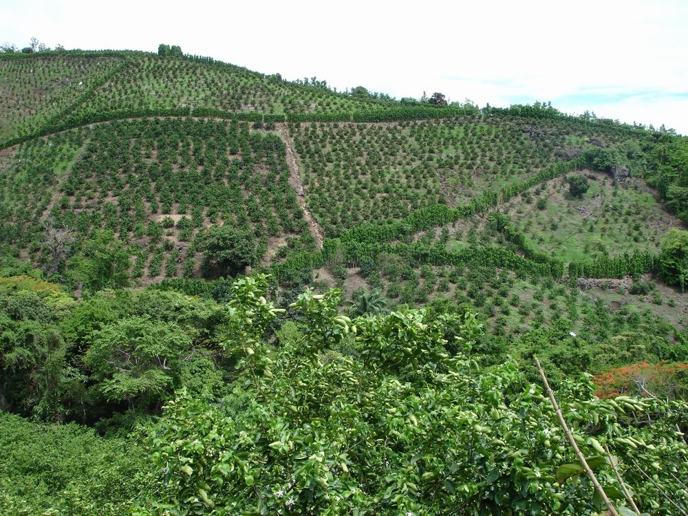 caribfruits 1 pr alable la plantation avant de planter conduite de son verger. Black Bedroom Furniture Sets. Home Design Ideas